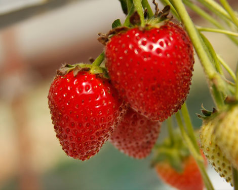 ягоди от фермата
