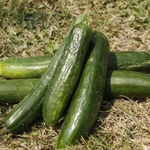 Краставици от Biotifulfarm